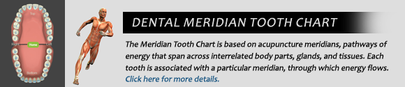 Dentist Skowhegan - Dental Meridian tooth Chart